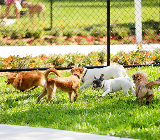 Meet your neighbors and their furry friends in the onsite dog park at Cambrian Rise